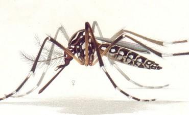El primer caso de Dengue autóctono se detectó en Rosario