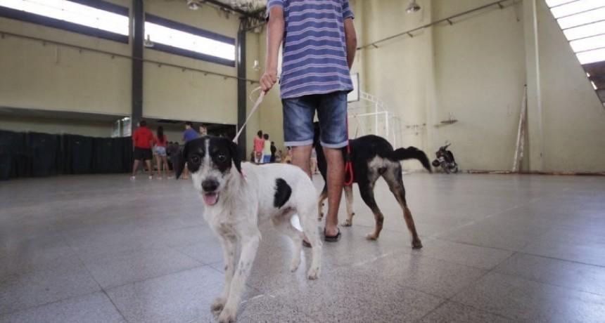 Castración de mascotas en vecinales Ciudadela Norte y Roma