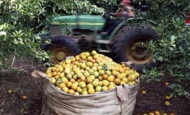 Brasil reabrió la importación de cítricos argentinos