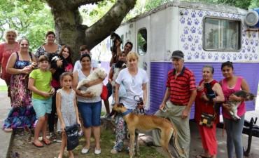 Castración de mascotas en el obrador municipal número uno de Santo Tomé