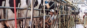La Provincia realizará aportes al sector lechero