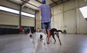 Castración de mascotas en vecinal San Martín de Santo Tomé