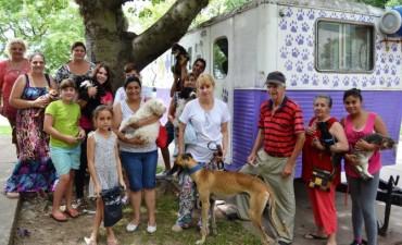 Castración de mascotas en Santo Tomé