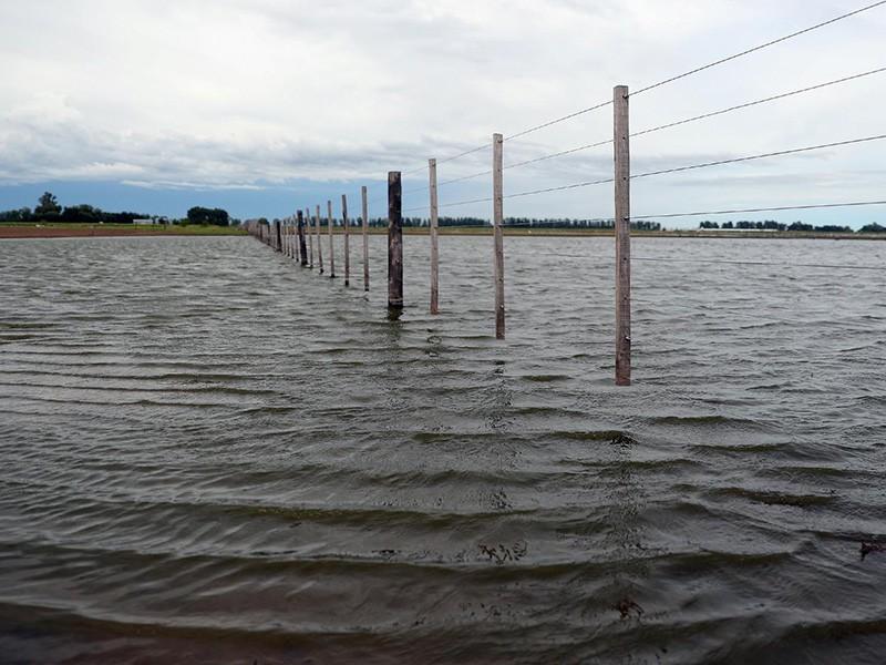 Pérdidas millonarias en el campo por las inundaciones en el norte argentino