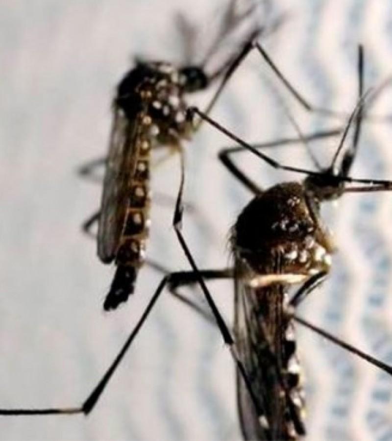 La ciudad registra su primer caso de Dengue