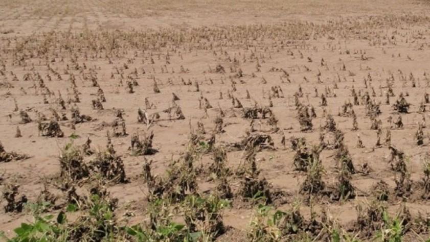 Emergencia agropecuaria en Salta por heladas y sequía