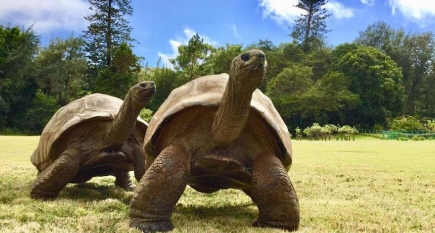 El animal más anciano del mundo: una tortuga tiene al rededor de 189 años