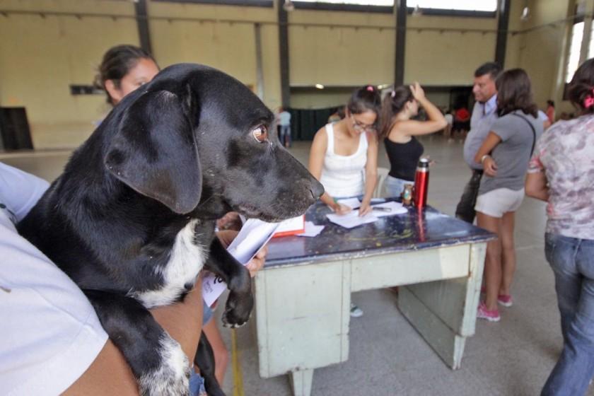 Castración de mascotas en Santa Fe