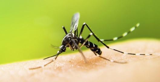 Rosario registra 34 casos de Dengue autóctono