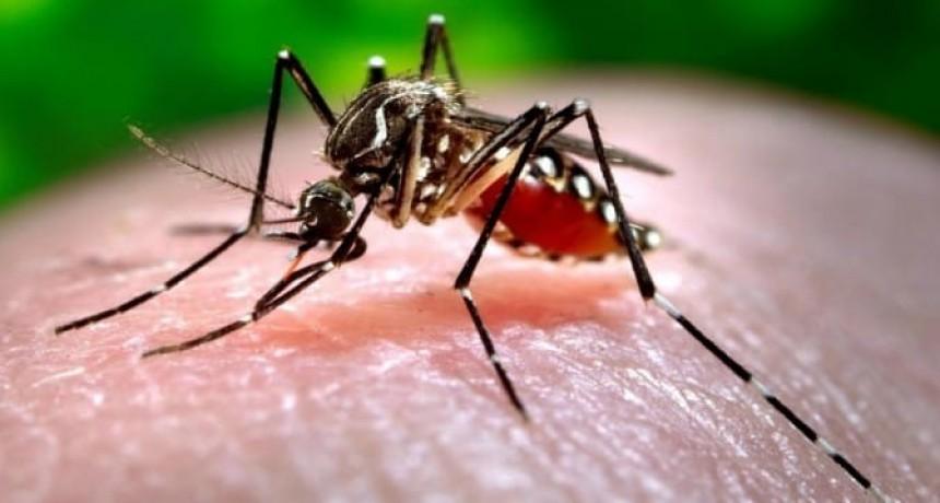 La ciudad de Santa Fe tiene más de la mitad de casos de Dengue de la provincia