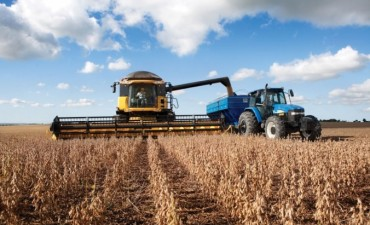 La cosecha de soja se redujo en el país por el exceso de lluvias