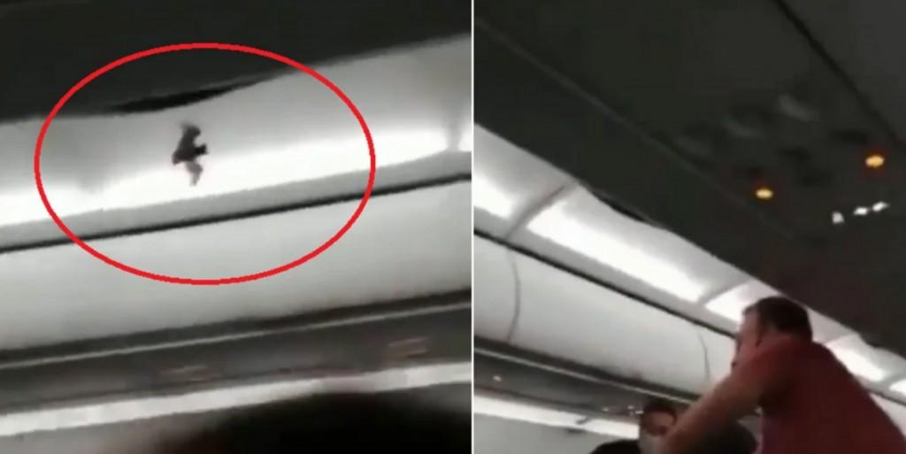 Un pasajero atrapó un murciélago dentro de un vuelo que partía de Córdoba