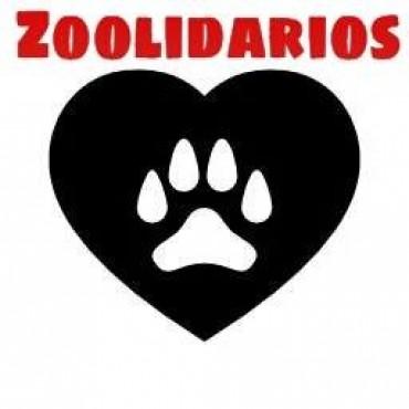Un hombre deberá donar 3 mil pesos a una protectora de animales por maltratar a un perro