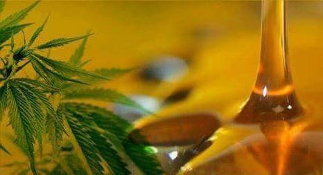 El LIF fabricará aceite de cannabis