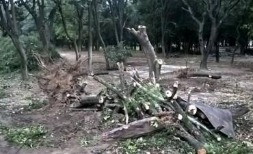 Los desmontes afectaron cuarenta y cinco mil hectáreas en el norte del país en seis meses