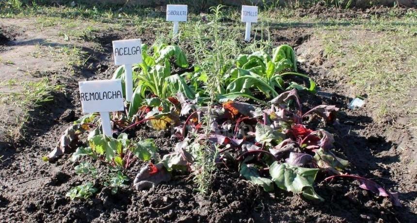 La entrega de semillas para Huertas Urbanas continúa la semana próxima