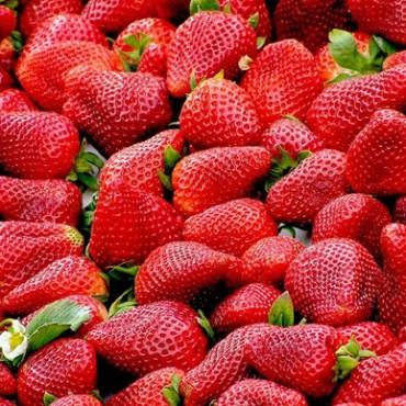 El crecimiento en la importación de frutillas congeladas preocupa en la producción regional