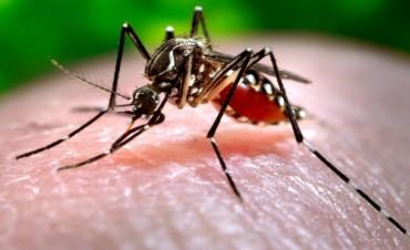 La Provincia reinicia la campaña de concientización para combatir el Dengue