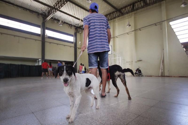 Castración de mascotas en barrio Las Lomas de Santa Fe