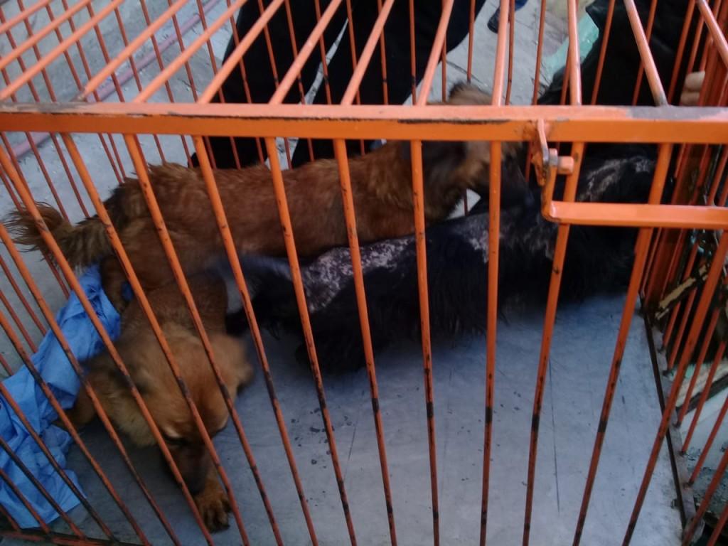 Ponen en adopción los animales rescatados el martes