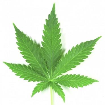 El Hospital Alassia organiza un charla sobre marihuana medicinal