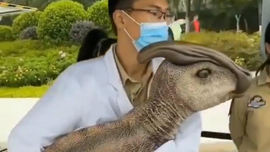 ¿Un dinosaurio clonado en China? Circula un video de científico sosteniendo un pequeño dinosaurio
