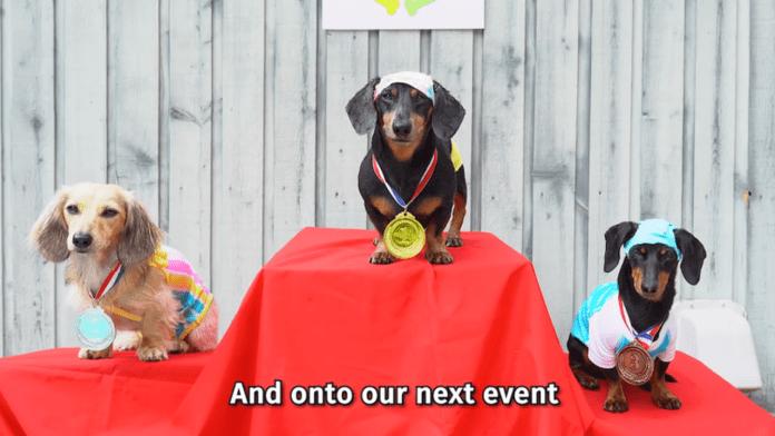 Perros salchichas participaron en sus propios Juegos Olímpicos