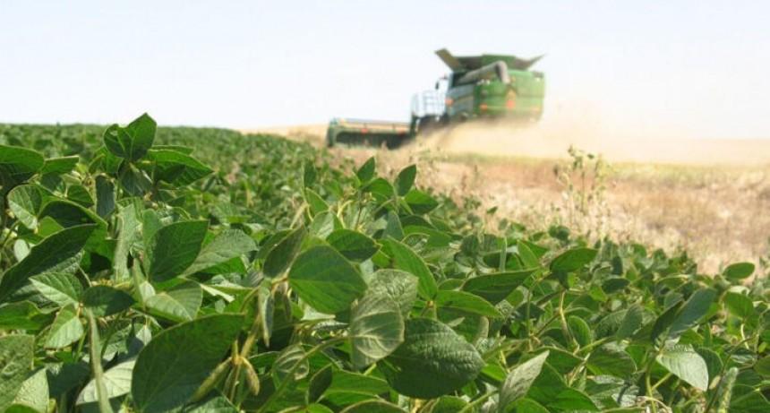 La baja de retenciones no es un incentivo sustancial para los productores de Soja