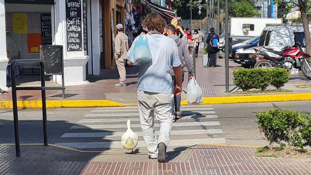 Un hombre paseó con un pato como mascota