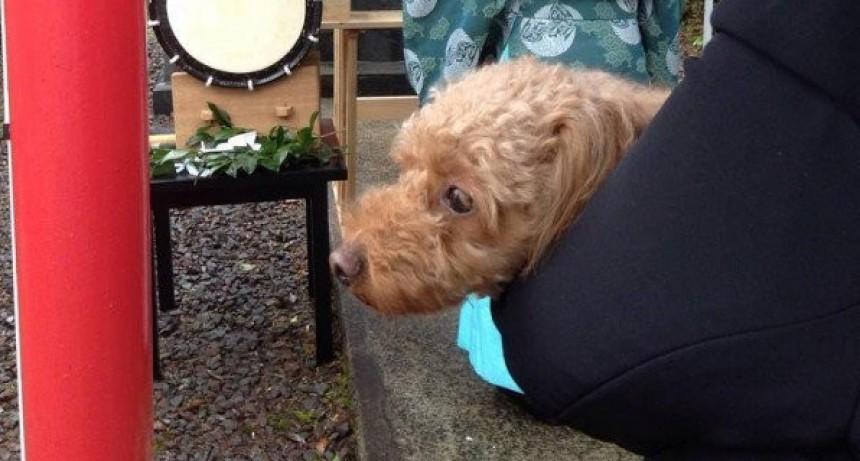 Un Spa exorciza perros en Japón