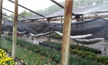 Emergencia agropecuaria en Colonia Caroya por una fuerte tormenta de granizo