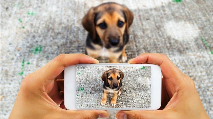 El Concejo impulsa la creación de una aplicación para usar en caso de mascotas extraviadas